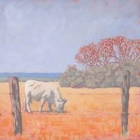 Coastal Cow Fine-Art Print