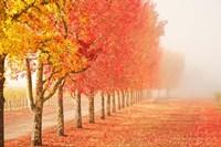 Fall Trees in the Mist Fine-Art Print