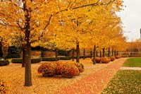 Fall Walkway Fine-Art Print
