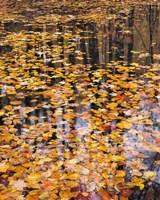 Autumn Detail Fine-Art Print