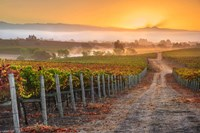 Vineyard Sunrise Fine-Art Print