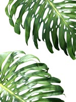 Double Philodendron (color) Fine-Art Print