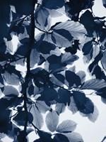 Indigo Leaves Fine-Art Print