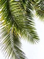 Palm Leaves Fine-Art Print