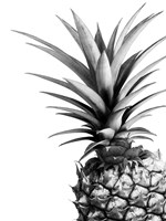 Pineapple (BW) Fine-Art Print
