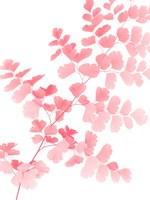 Pink Maidenhair Fine-Art Print