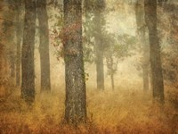 Oak Grove in Fog Fine-Art Print