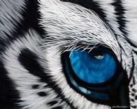 Tiger Eye Fine-Art Print