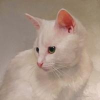 White Kitten Fine-Art Print