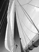 Sailboat Sails Florida Fine-Art Print