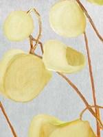 Milkweed on Pale Gray Fine-Art Print