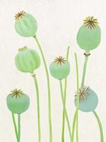 Poppy Pods on Ecru Fine-Art Print
