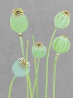 Poppy Pods on Grey Fine-Art Print