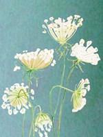 Queen Anne's Lace Fine-Art Print