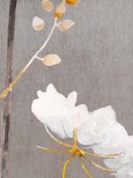White Flower on Medium Gray Fine-Art Print