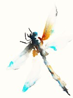 Blue & Brown Dragonfly Fine-Art Print