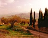 Toscana, Italia No. 709 Fine-Art Print