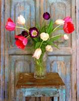 Tulips, Mexico Fine-Art Print