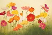 Sunlit Poppies Fine-Art Print