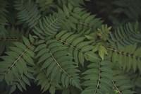 Leafy VI Fine-Art Print