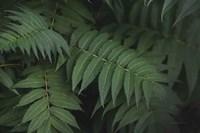 Leafy V Fine-Art Print