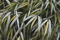 Leafy IV Fine-Art Print