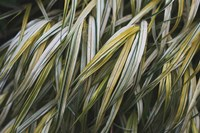 Leafy III Fine-Art Print