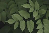 Leafy II Fine-Art Print