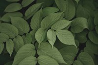 Leafy I Fine-Art Print