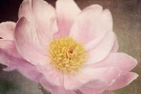 Peony in the Park Fine-Art Print