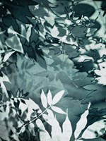 Abstract Leaves Fine-Art Print