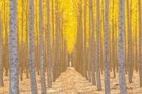 Silence Is Golden Fine-Art Print