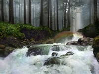 Following the River of Life Fine-Art Print