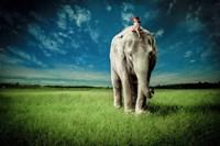 Elephant Carry Me Fine-Art Print