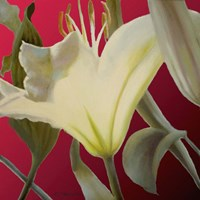 Lily Red Fine-Art Print