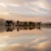 Dawn Mist on the Amazon Fine-Art Print