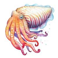 Cuttlefish Fine-Art Print