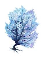 Fan Coral - Blue Fine-Art Print