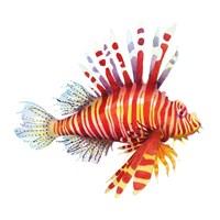 Firefish Fine-Art Print