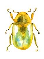 Golden Beetle Fine-Art Print