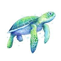 Green Sea Turtle Fine-Art Print