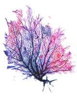 Sea Fan - Purple Fine-Art Print