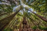 Avatar Grove Canopy Fine-Art Print