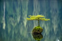 Fairy Lake Bonsai Fine-Art Print