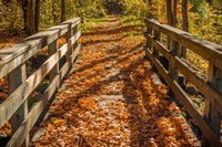 Fall On The Footbridge Fine-Art Print