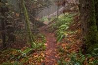Forest Stroll Fine-Art Print