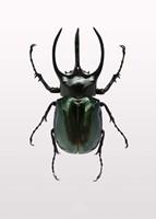 Beetle 2 Fine-Art Print