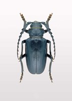 Beetle 3 Fine-Art Print