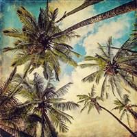 Kauai Island Palms Fine-Art Print