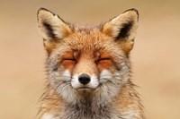 Zen Fox Red Portrait Fine-Art Print